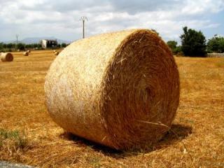 Práce v zemědělství s ubytováním